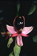 Foto di orchidea selvatica
